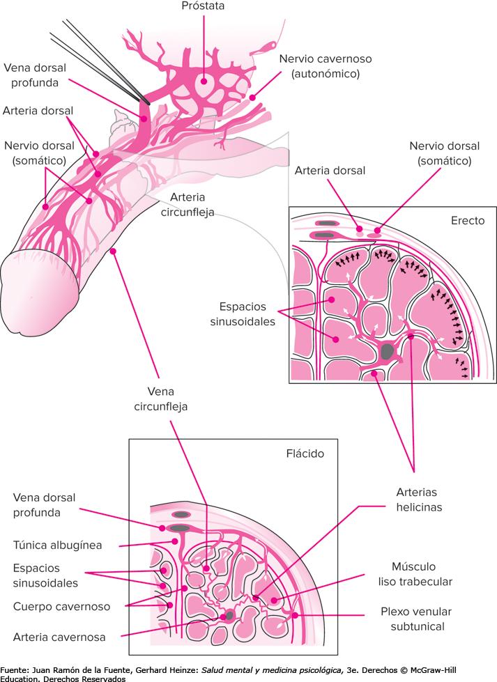 disfunción eréctil e hiperplasia benigna de prostata por sexologos valencia